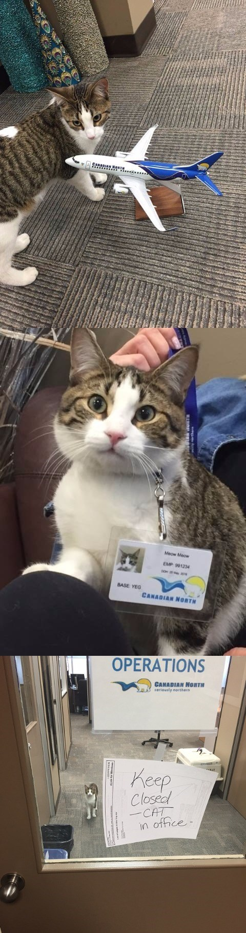 airline looked after a cat when her owner went into labor