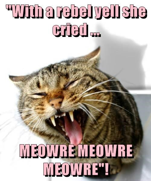 """With a rebel yell she cried ...  MEOWRE MEOWRE MEOWRE""!"