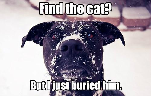 cat buried dogs caption snow - 8797822720