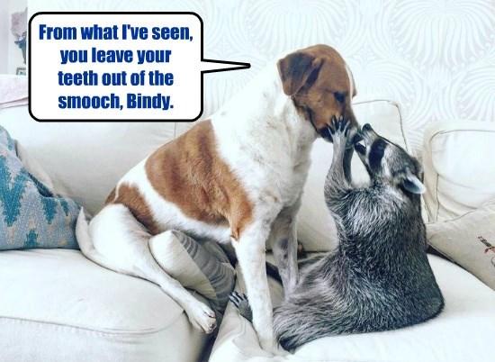 smooch dogs raccoon teeth caption - 8797829120