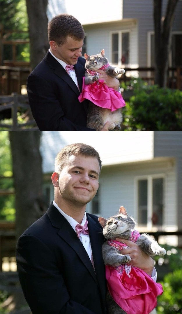 this guy took prom photos with his cat