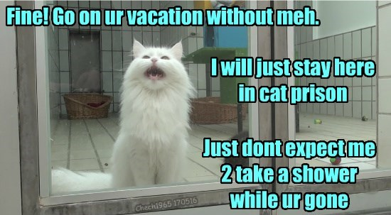 cat stay shower go expect dont prison vacation - 8797861120