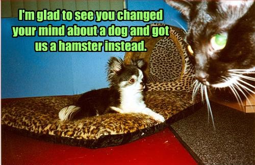 I'm glad to see you changed your mind about a dog and got us a hamster instead.