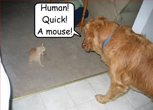 dogs kitten human caption mouse
