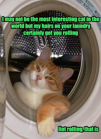 I may not be the most interesting cat in the world but my hairs on your laundry certainly get you rolling lint rolling, that is