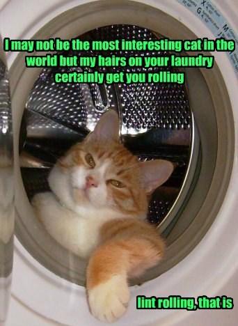 laundry humor caption Cats - 8797906432