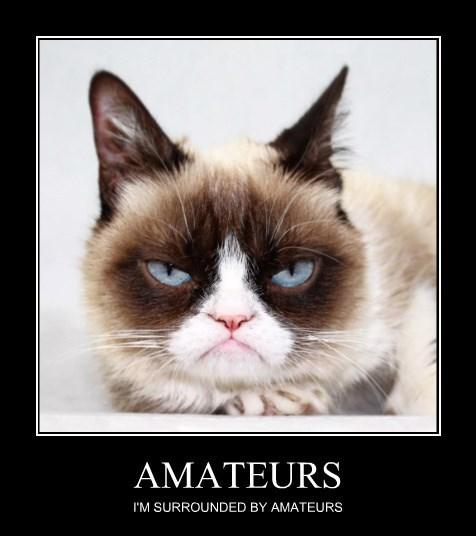Grumpy Cat amateurs surrounded caption - 8797908224