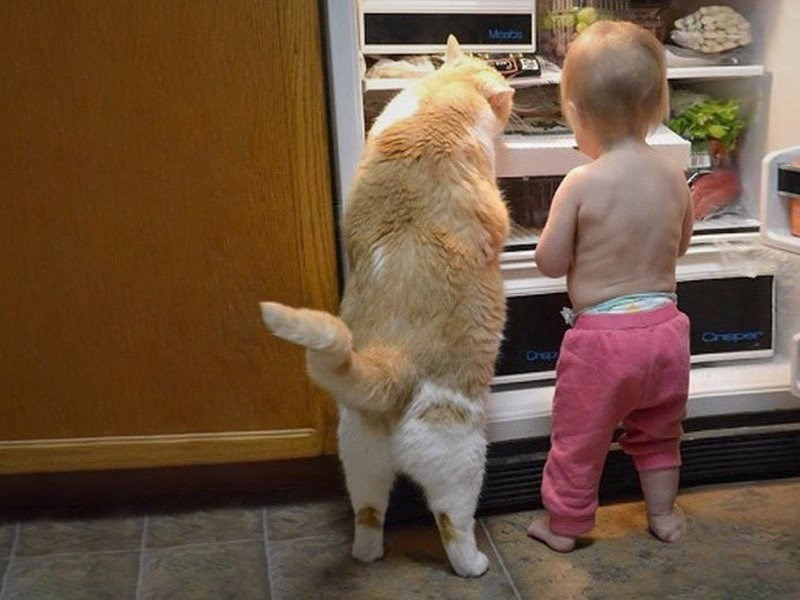 Babies parenting fridge Cats