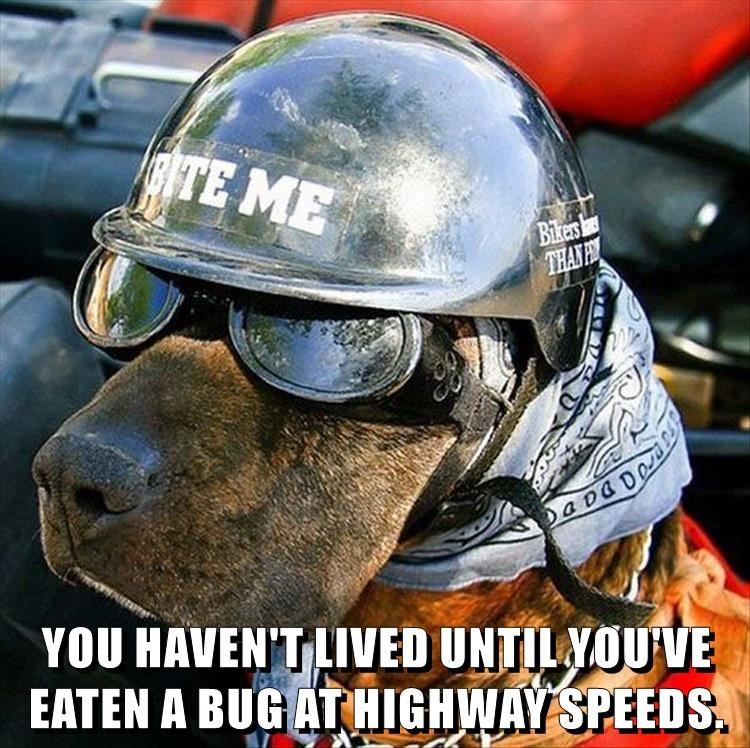 dogs,highway,bug,caption,biker
