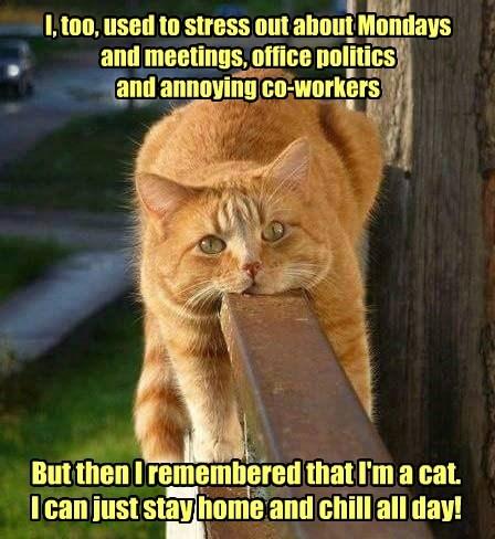 cat stress chill mondays caption - 8798101760