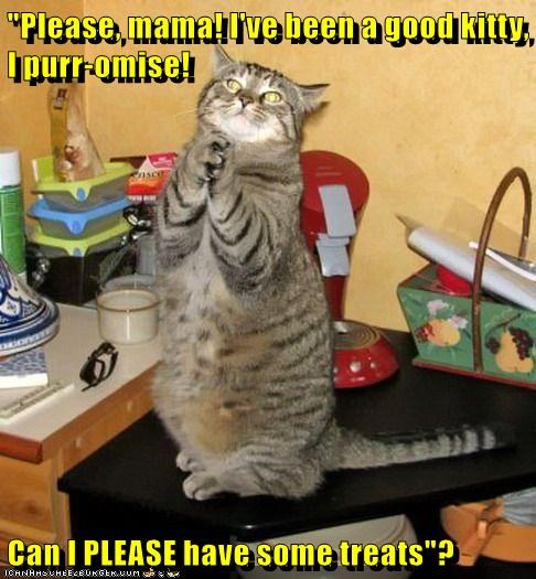 animals treats promise caption Cats - 8798119680