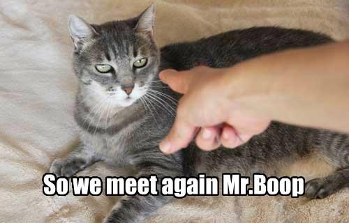 boop caption Cats - 8798142464