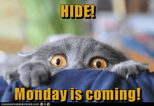 animals cat hide caption monday - 8798179328