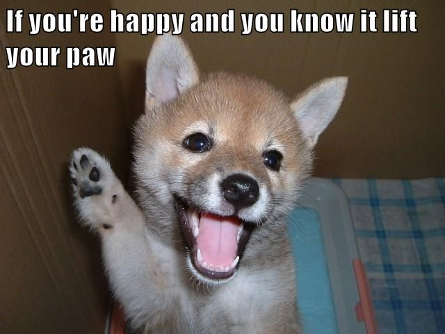 animals puppy happy caption - 8798339072