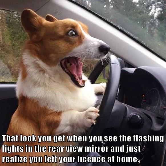 That look you get when you see the flashing lights in the rear view mirror and just realize you left your licence at home.