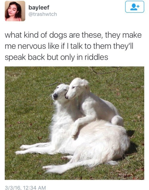dogs twitter riddles - 8798421248