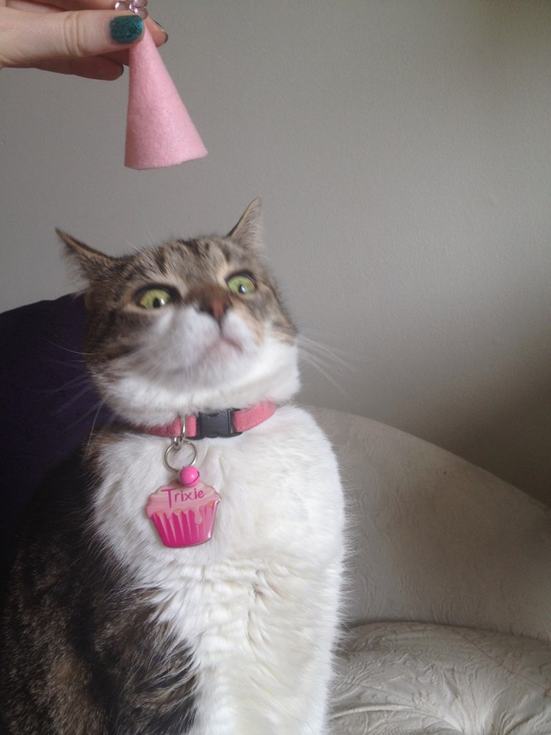 trixie hates her birthday hat