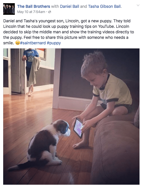 dogs,puppy,youtube,training