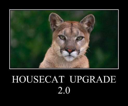 HOUSECAT  UPGRADE 2.0