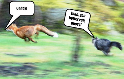 Oh fox! Yeah, you better run, pussy!