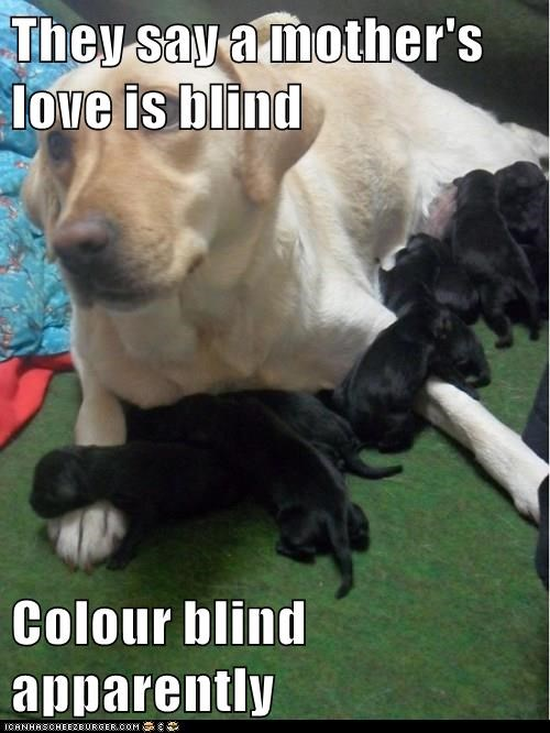 They say a mother's love is blind Colour blind apparently
