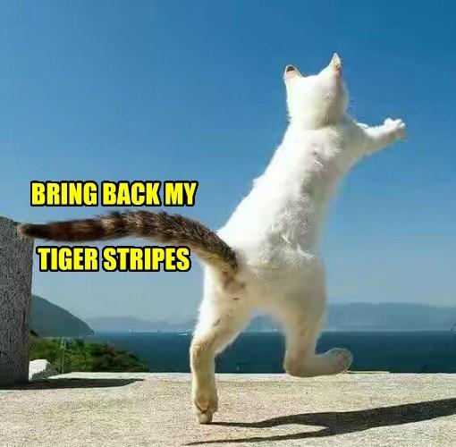 BRING BACK MY   TIGER STRIPES
