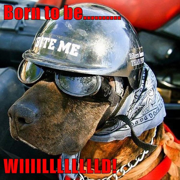 dogs,helmet,biker,caption,wild
