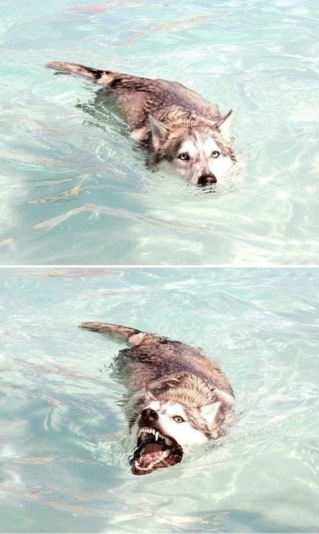 look at me im a crocodog
