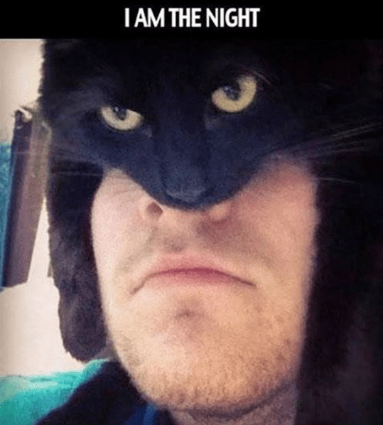batman-in-real-life-moment-with-cat-superheroes