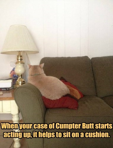 When your case of Cumpter Butt starts acting up, it helps to sit on a cushion.
