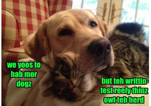 cat dogs more thins herd test written caption - 8798766848