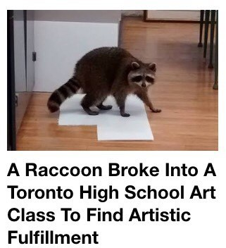 image raccoon news Hate to Break it to You Buddy, But You're Not Going to Find It There