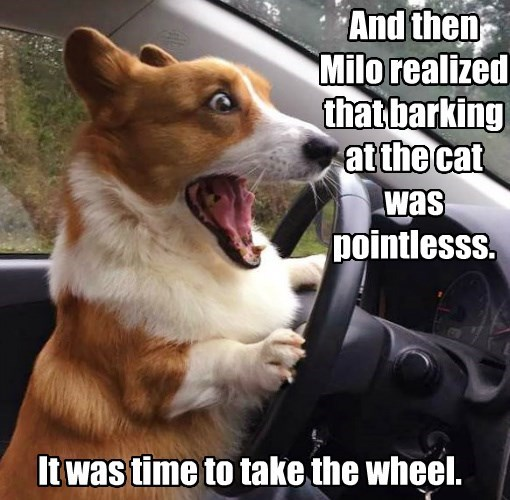"The Cat Said To Him: ""You're So Dumb, You'd You'd Chase A Parked Car!"""