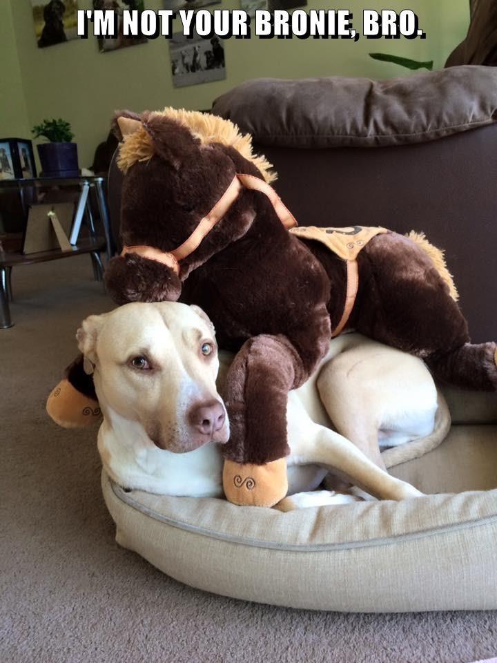 animals dogs bro pony caption horse - 8798962944