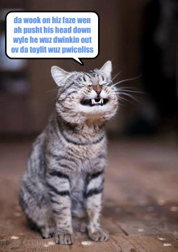 cat drinking face priceless look toilet caption - 8798963456
