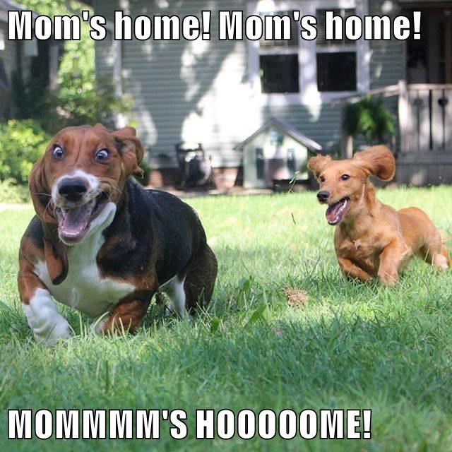animals dogs moms caption home - 8798978560