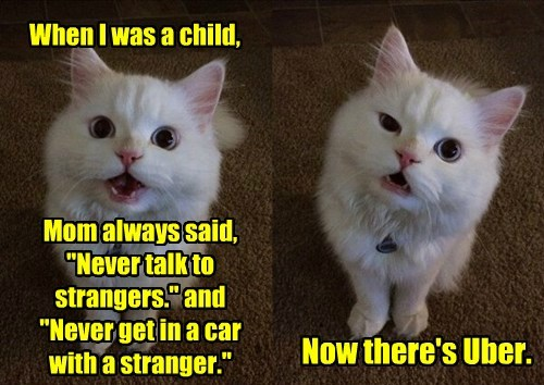 cat child uber strangers caption - 8799030272