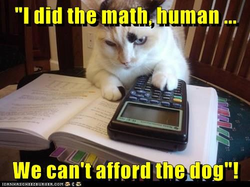 animals cat dogs caption math afford - 8799032832
