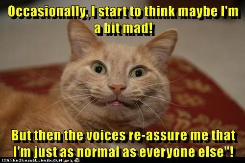animals crazy caption Cats - 8799033088