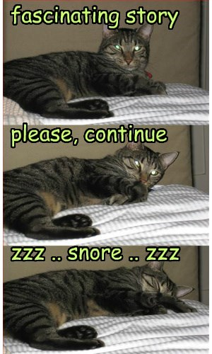 cat fascinating story caption snore - 8799036672