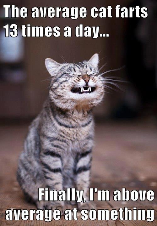 animals cat farts average caption - 8799100416