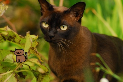 neko atsume - Cat - DE
