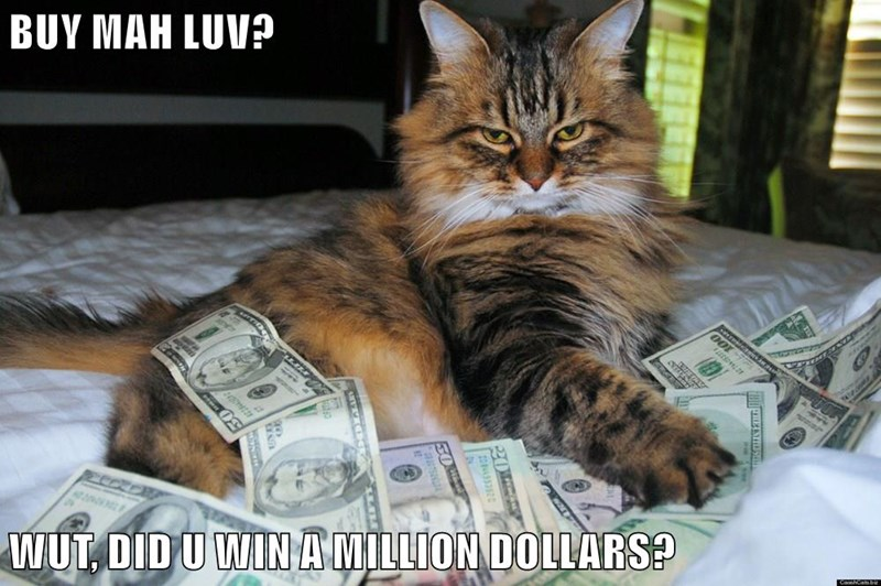 animals love caption Cats money