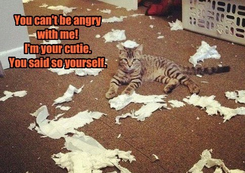 angry caption mess Cats - 8799200768
