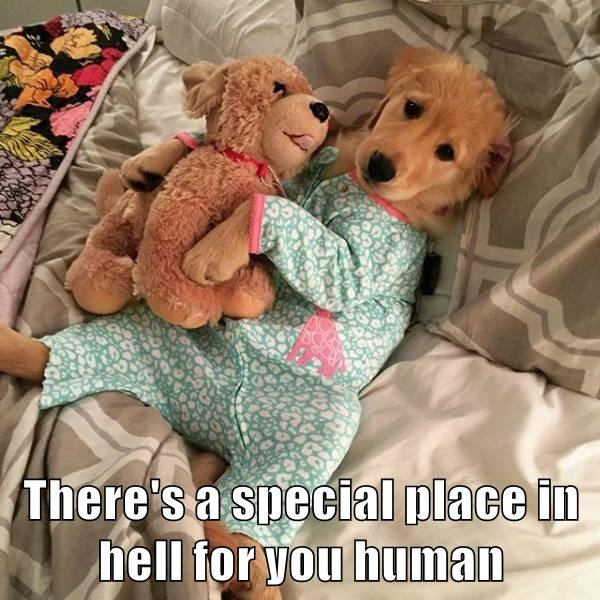 dogs,onesie,puppy,caption