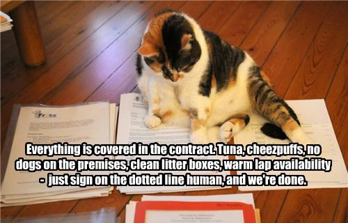 Everything is covered in the contract. Tuna, cheezpuffs, no dogs on the premises, clean litter boxes, warm lap availability - just sign on the dotted line human, and we're done.