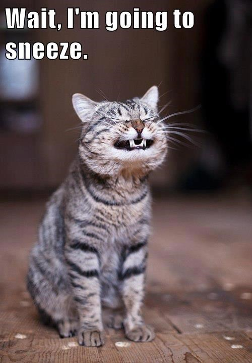 animals caption sneeze Cats - 8799226368