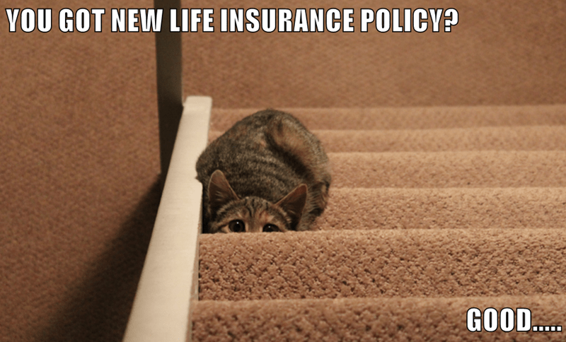 animals life insurance caption Cats - 8799237120