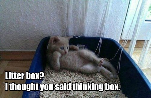thinking litter box caption Cats - 8799241472