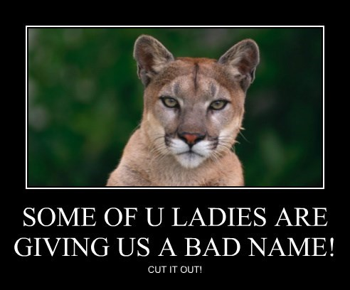 cougar caption Cats - 8799270144